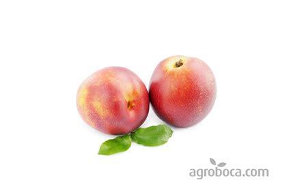 Comprar nectarinas online, venta de nectarinas en Internet ...