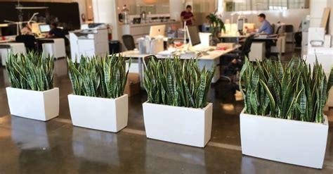 Comprar plantas de interior: 5 ideas oficina - Florestore