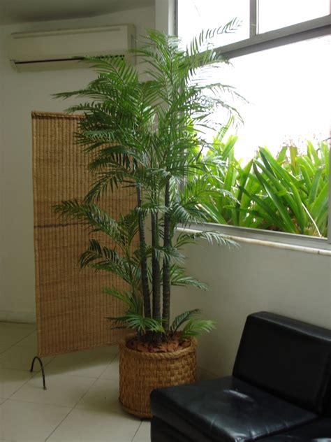 Comprar Plantas De Interior - Diseños Arquitectónicos ...