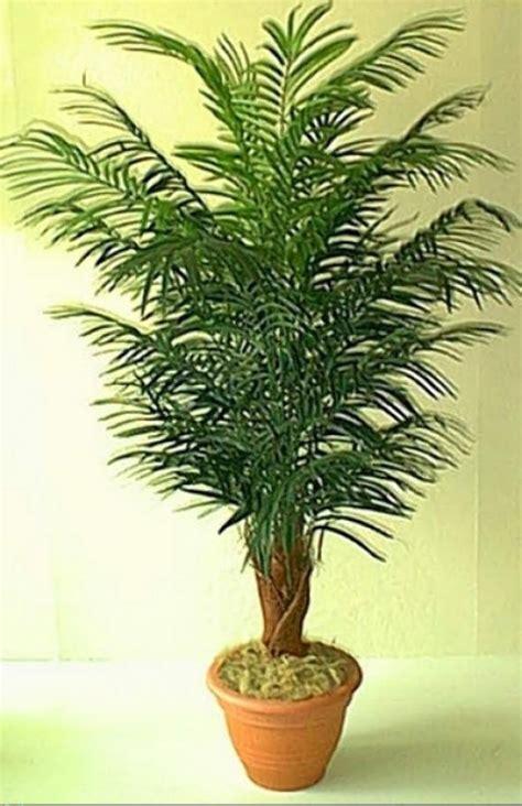 Comprar Plantas De Interior Online. Awesome Dijard N ...
