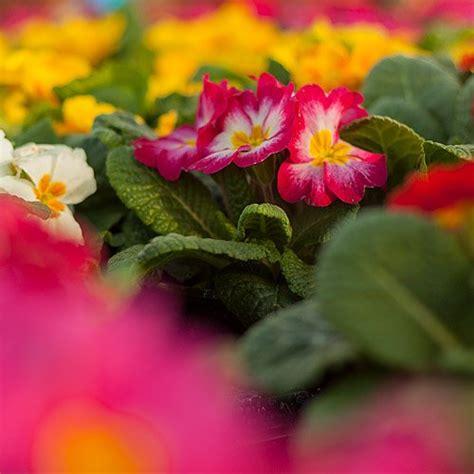 Comprar plantas en Madrid | Viveros Angel