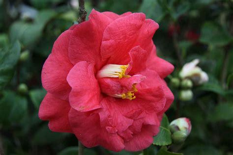 Comprar plantas online en Plantamus, vivero en España ...