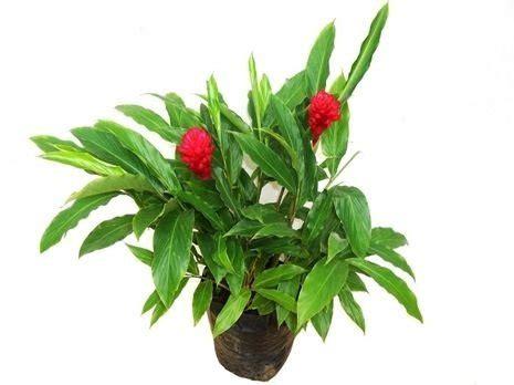 comprar plantas online,comprar plantas artificiais,comprar ...