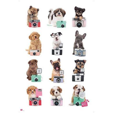 Comprar Poster Studio Pets Perros Cámara