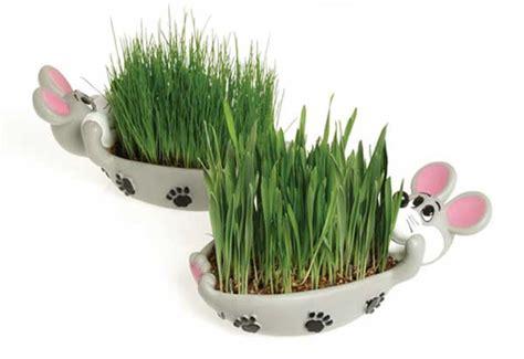 Comtú Gourmets: Truco para la hierba gatera