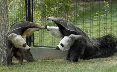 Concurso fotográfico del Zoo Aquarium de Madrid ...