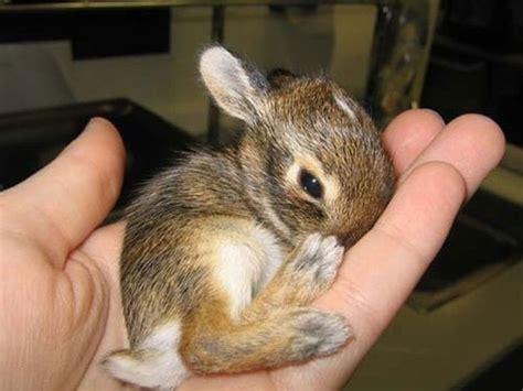 Conejos bonitos y tiernos   Imagui
