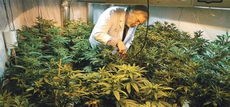 Confesión de un doctor que bebió aceite de cannabis Yo ...