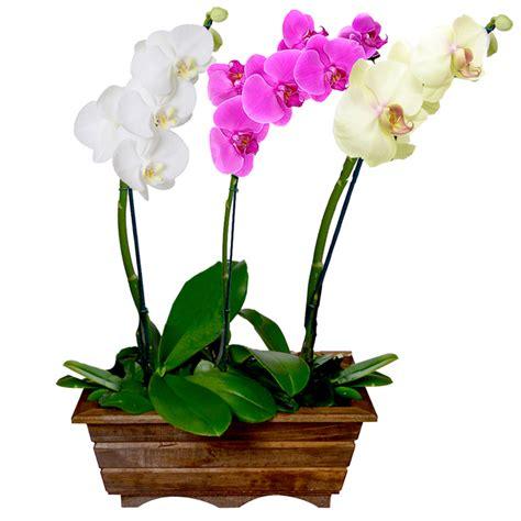 Conheça os Tipos de Orquídea e Seus Significados