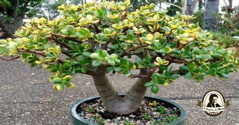 Conhece esta planta? Aprenda a propagá-la facilmente!