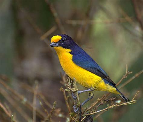 Conhecendo os Animais: Aves Passeriformes   Parte I