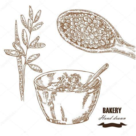 Conjunto de cereales. Desayuno de avena de ilustración ...
