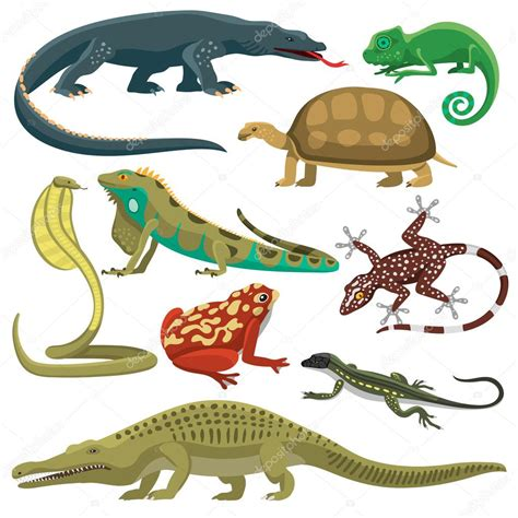 Conjunto de vectores de animales reptiles — Archivo ...