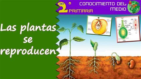 Cono, 2º Primaria. Tema 6. La reproducción de las plantas ...
