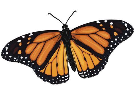 ¡Conoce a la Mariposa Monarca! | El Dictamen