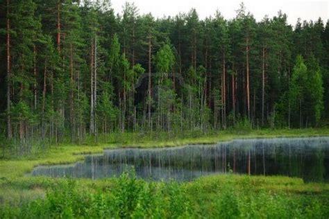 Conoce, cuida y ama a los bosques con estas 8 claves ...