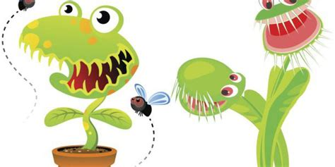 Conoce el fascinante mundo de las plantas carnívoras ...