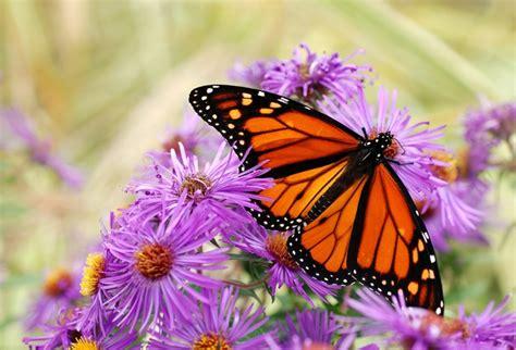 Conoce las 23 mariposas más HERMOSAS del mundo ¡Parecen ...