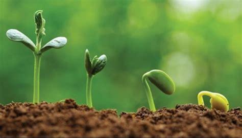 Conociendo nuestro Reino Vegetal. – Entramar – Tecnología ...