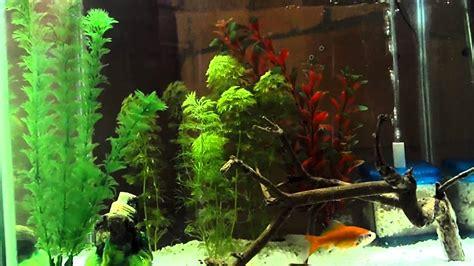 consejos para acuarios plantados!!   YouTube