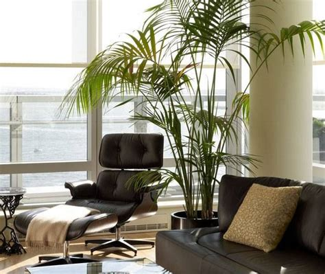 Consejos para comprar plantas de interior - pisos Al día ...