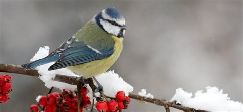 Consejos para cuidar a los pájaros llegado el invierno ...