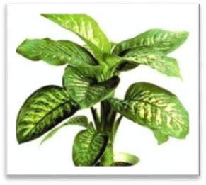 Consejos para el cuidado de tus Plantas - Tienda Online de ...