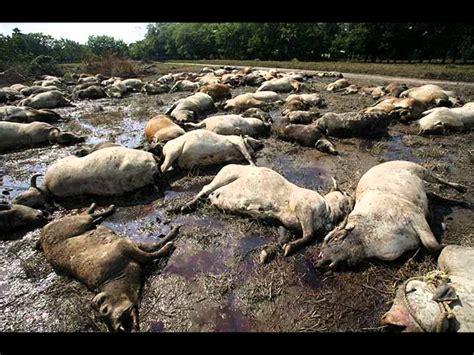 Contaminacion Agua   contaminacion del agua, contaminaci ...