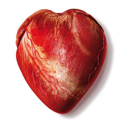 Corazón bioartificial - Quo