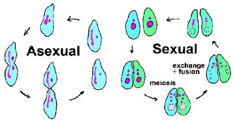 cortejo animal: tipos de reproduccion