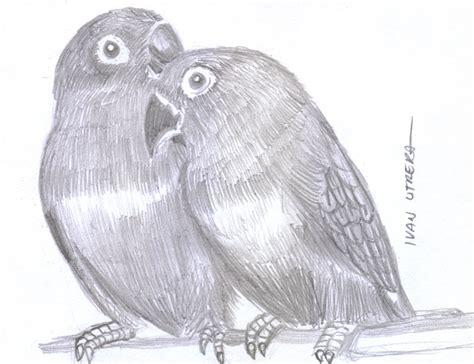 cotorritos a lapiz - Ilustra