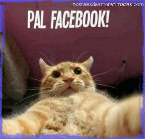 Creativos Chistes de Risa para Facebook que Todos Compartirán