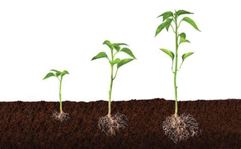 Crecimiento de las plantas   Imagui