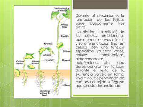 Crecimiento de una planta