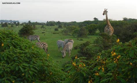 Crescent Island (Kenia): La isla salvaje de Memorias de ...