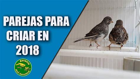 Cria del Canario  Parejas para la cría 2018    YouTube