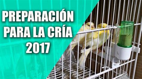 Cría del Canario y Silvestre  Preparación para cría 2017 ...