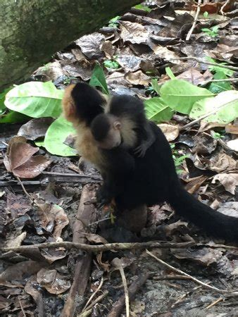 CRS Tours Costa Rica - Day Tours (San Jose): Top Tips ...