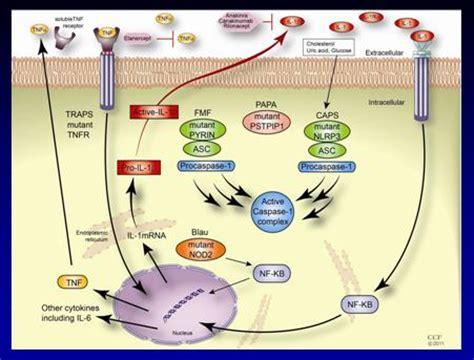 Cryopyrin-Associated Periodic Syndromes