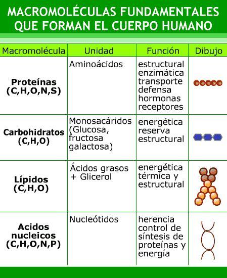 Cuadro con las macromoléculas fundamentales y sus funciones