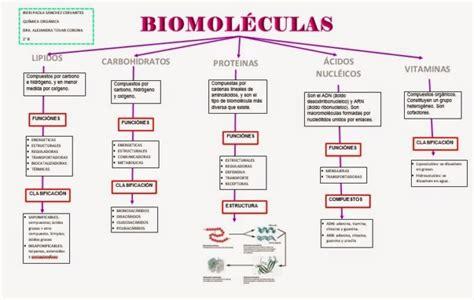 Cuadros comparativos de Biomoléculas | Cuadro Comparativo