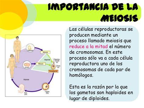 Cuadros comparativos entre Mitosis y Meiosis   Cuadro ...