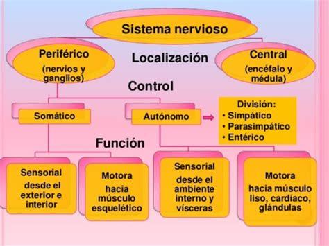 Cuadros comparativos y sinópticos sobre sistema nervioso y ...