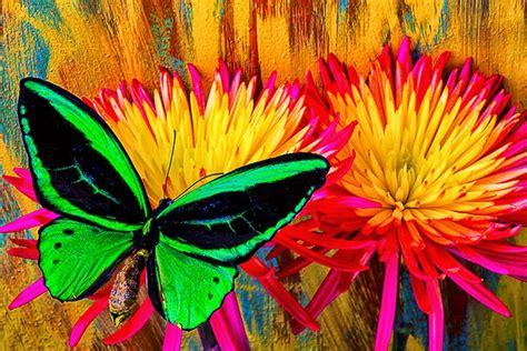 Cuadros Modernos: Imagenes de Flores con Mariposas de ...