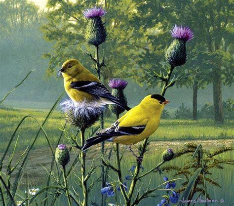 Cuadros Modernos Pinturas y Dibujos : Coloridos Pájaros y ...