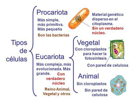 Cuadros sinópticos sobre células vegetales y animales ...