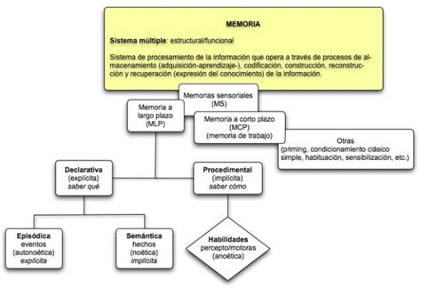 Cuadros sinópticos sobre la memoria humana | Cuadro ...
