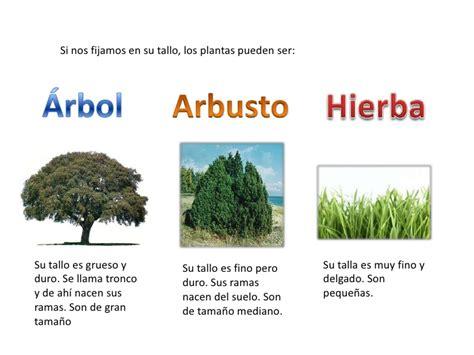 Cuadros sinópticos sobre las plantas: Clasificación y ...