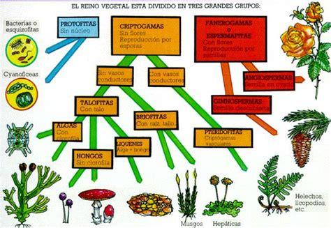 Cuadros sinópticos sobre reino vegetal o reino plantae ...