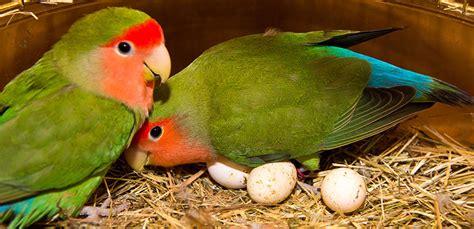¿Cuál es el mejor ave para tener en casa y para niños ...